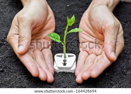 hands holding and caring a tree growing on a socket / green energy / save the world - stock photo