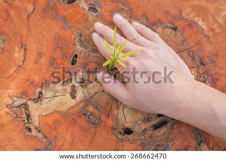 hands holding and nurturing a young green plant growing on dead tree trunk - stock photo