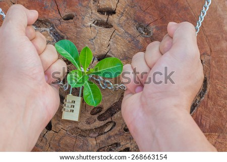 hands holding and nurturing a young green plant growing on dead tree trunk - concept save the tree - stock photo
