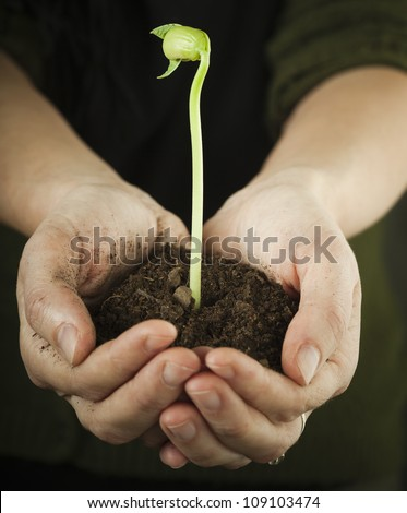 Hands holding bean sprout - stock photo