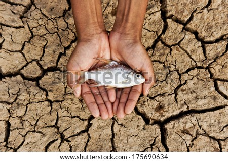 hands holding fish over cracked earth / saving animal life / extinction / river dried up - stock photo