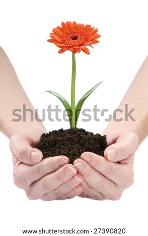 Hands holding flower isolated on white background