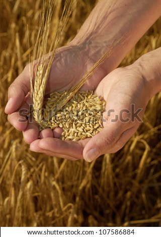 Hands holding grain - stock photo
