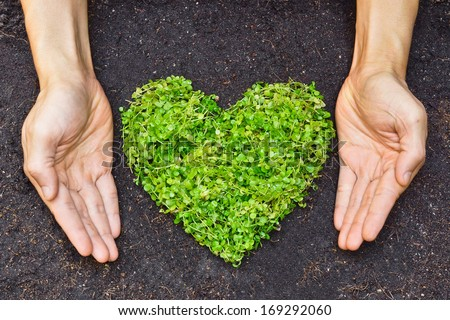 hands holding green heart shaped tree / green baby plant arranged in a heart shape / love nature / save the world / heal the world / environmental preservation - stock photo