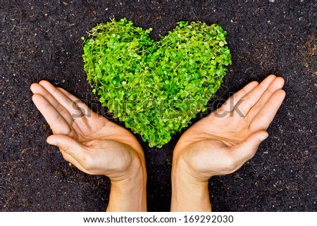hands holding green heart shaped tree / green baby plants arranged in a heart shape / love nature / save the world / heal the world / environmental preservation - stock photo