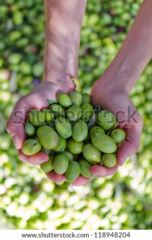 Hands holding green olives - stock photo