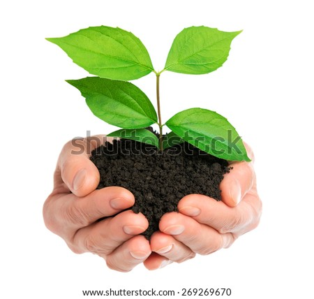Hands holding green plant isolated - stock photo