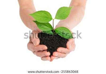 Hands holding green plant new life concept - stock photo