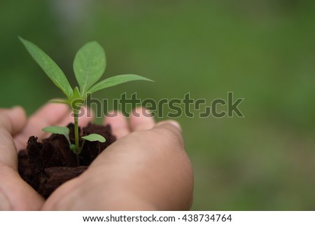 Hands holding green sapling