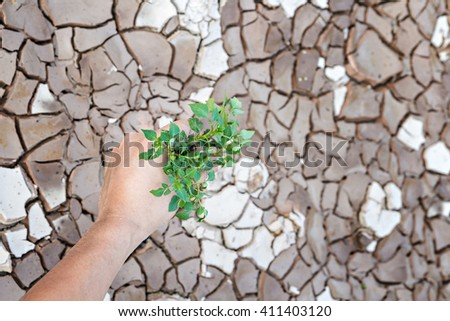 Hands holding green tree sprout on cracked ground - stock photo