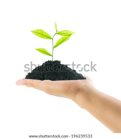 hands holding new life plant on over white background