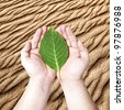 Hands holding on the green leaf on the sand desert background. Concept for planting the tree to reduce global warming - stock photo
