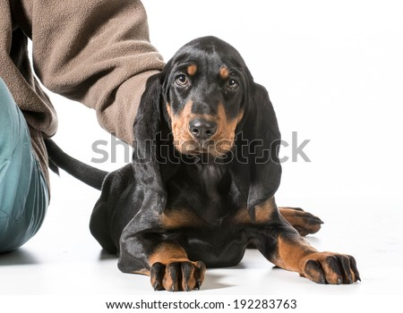 hands holding on to black and tan coonhound on white background