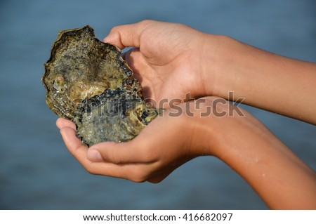 hands holding oysters with sea as a background
