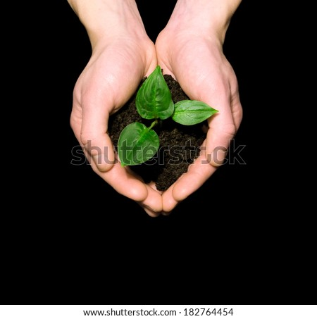 Hands holding plant - stock photo