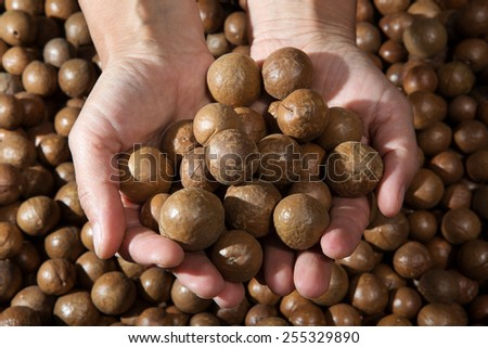 hands holding raw bulk macadamia nuts - stock photo