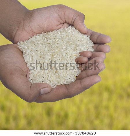 hands holding rice on a background of rice paddy - stock photo