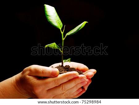 Hands holding sapling in soil on black - stock photo