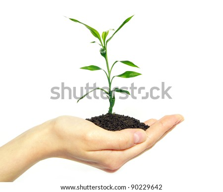 Hands holding sapling in soil  on white - stock photo