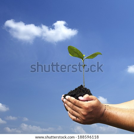Hands holding seedlings