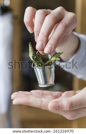 Hands holding small bucket with dry stevia leaves  - stock photo
