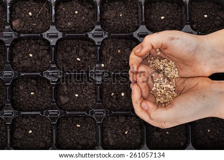 Hands holding spring seeds ready to sow in a germination tray - closeup - stock photo
