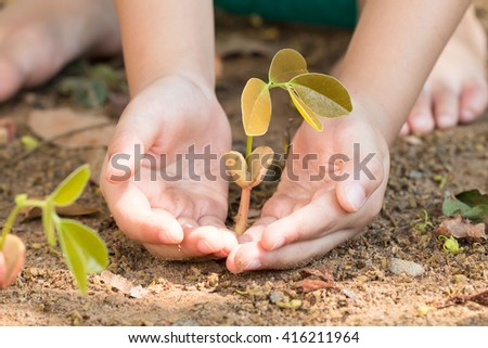 Hands holding sprout plants. Close up. Spring concept, nature conservation and care.
