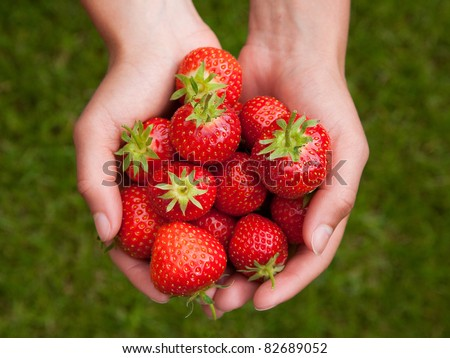 hands holding strawberries isolated on white - stock photo