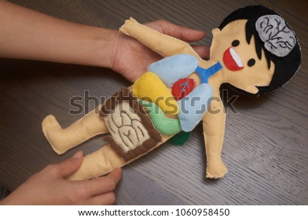 Hands holding colourful human body anatomy stock photo royalty free hands holding the colourful human body anatomy doll with wooden background a ideal diy preschool ccuart Image collections