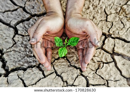 Hands holding tree growing on cracked earth / hands growing tree / save the world / environmental problems / cut tree