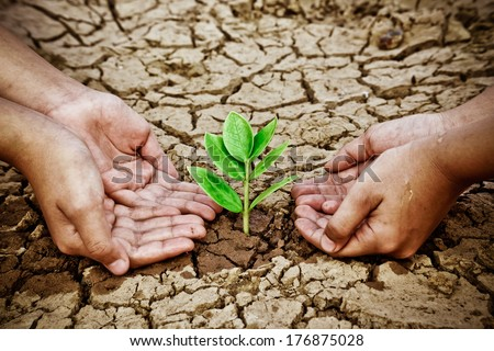 hands holding tree growing on cracked earth /hands growing tree / save the world / environmental problems / love nature / heal the world / cut tree / watering tree on crack ground - stock photo