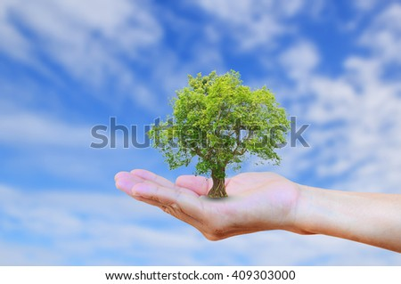 Hands holding tree with burred blue sky background. Ecology concept. World Environment, Earth Day, Organ Donation, Creation, Holy Bible concept - stock photo