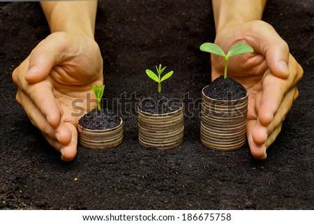 hands holding trees growing on coins / csr / sustainable development / economic growth / trees growing on stack of coins - stock photo