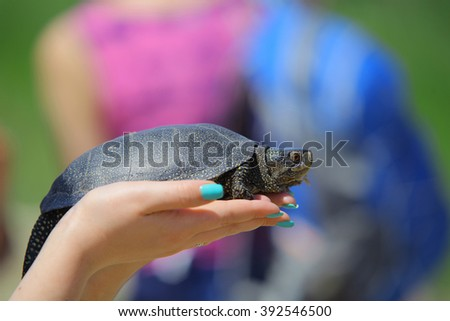 Hands holding turtle, river turtle, pet in the hands of girl - stock photo