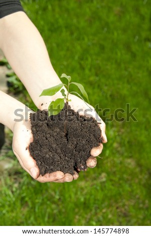 Hands holding young green plant - stock photo