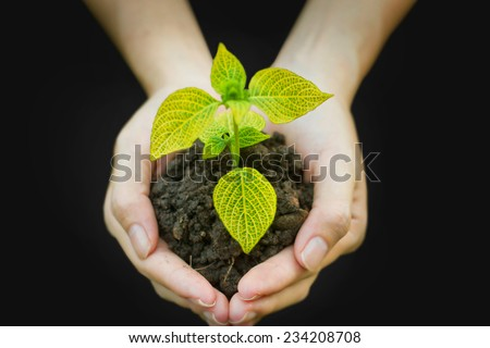 hands holding young plant. Ecology concept - stock photo