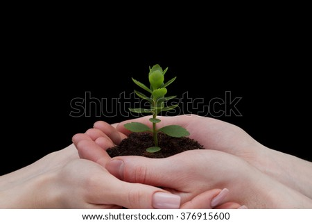 hands holding young plant. Ecology concept