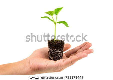 Hands holding young seedling growing in a soil isolated on white background.