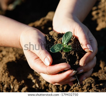 Image result for stock photo hands in dirt