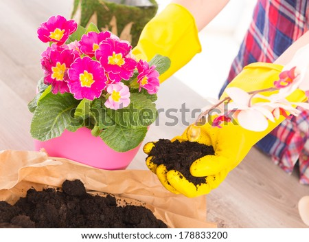 Hands in yellow glowes planting colorfull flower in a flowerpot - stock photo