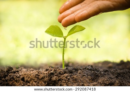 hands nurturing and watering a young plant / Love and protect nature concept / nurturing baby plant - stock photo