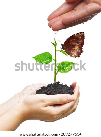 hands nurturing and watering a young plant with a butterfly / Love and protect nature concept - stock photo