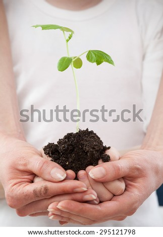 Hands of a child and hands of a woman holding a green sprout - closeup shot - stock photo