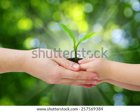 hands of a child taking a plant from the hands of a mother - stock photo