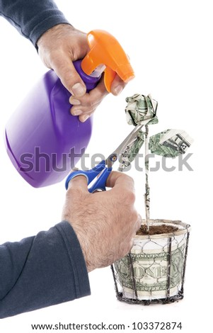 hands of a man tending a rose made with a one dollar bill, Metaphor of economy - stock photo