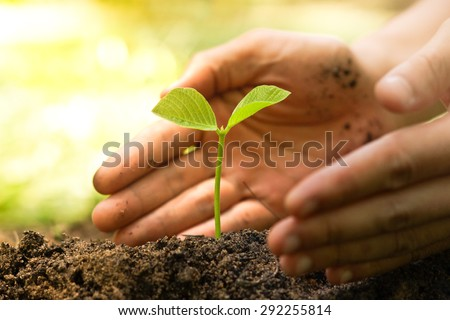 Hands of farmer growing and nurturing tree growing on fertile soil with green and yellow bokeh background - stock photo