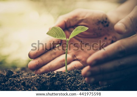 Hands of farmer growing and nurturing tree growing on fertile soil with green and yellow bokeh background / nurturing baby plant / protect nature