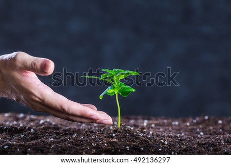 hands of man that grow plants
