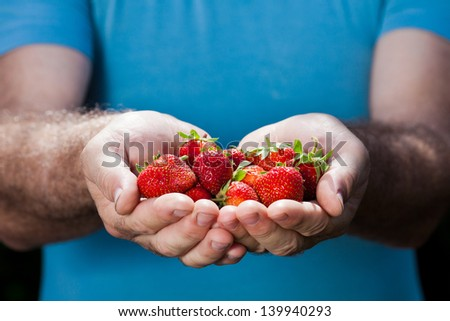 hands of senior man holding strawberry
