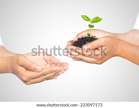 Hands of woman holding and taking a young plant isolated on white. Ecology concept